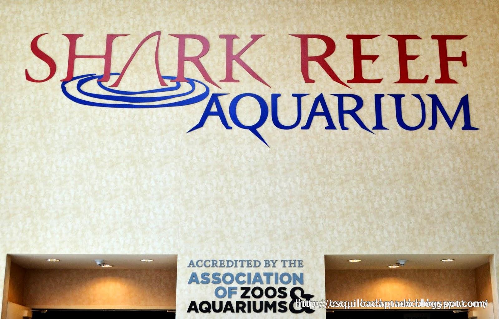 las vegas shark reef aquarium esquilo adaptado